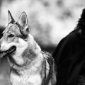 2012-01-04_rotkaeppchen_wolf