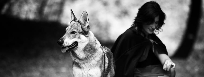 Rotkäppchen und der liebe wolf