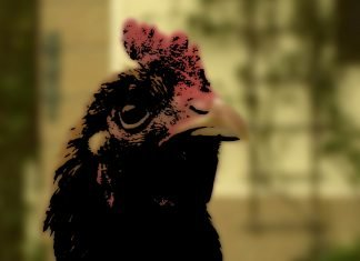 ein Kurzfilm von Hannes Maar