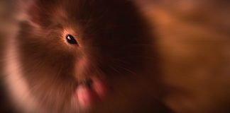 Kurzfilm: The Hamster