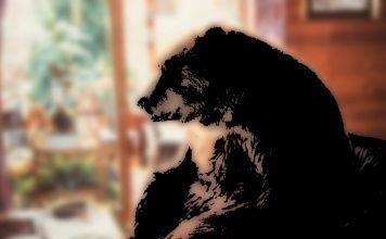 Kurzfilm: Bär