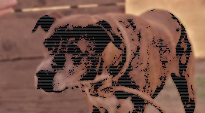 Kurzfilm: Grill Dog