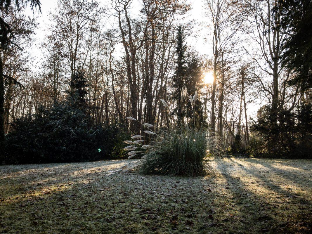 Foto: Garten im Winter