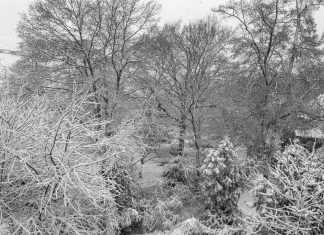 Foto: Schnee in Spich