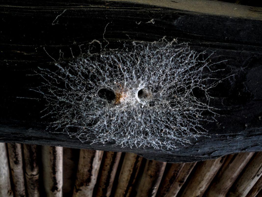 Foto: Ibizenkisches Spinnennetz