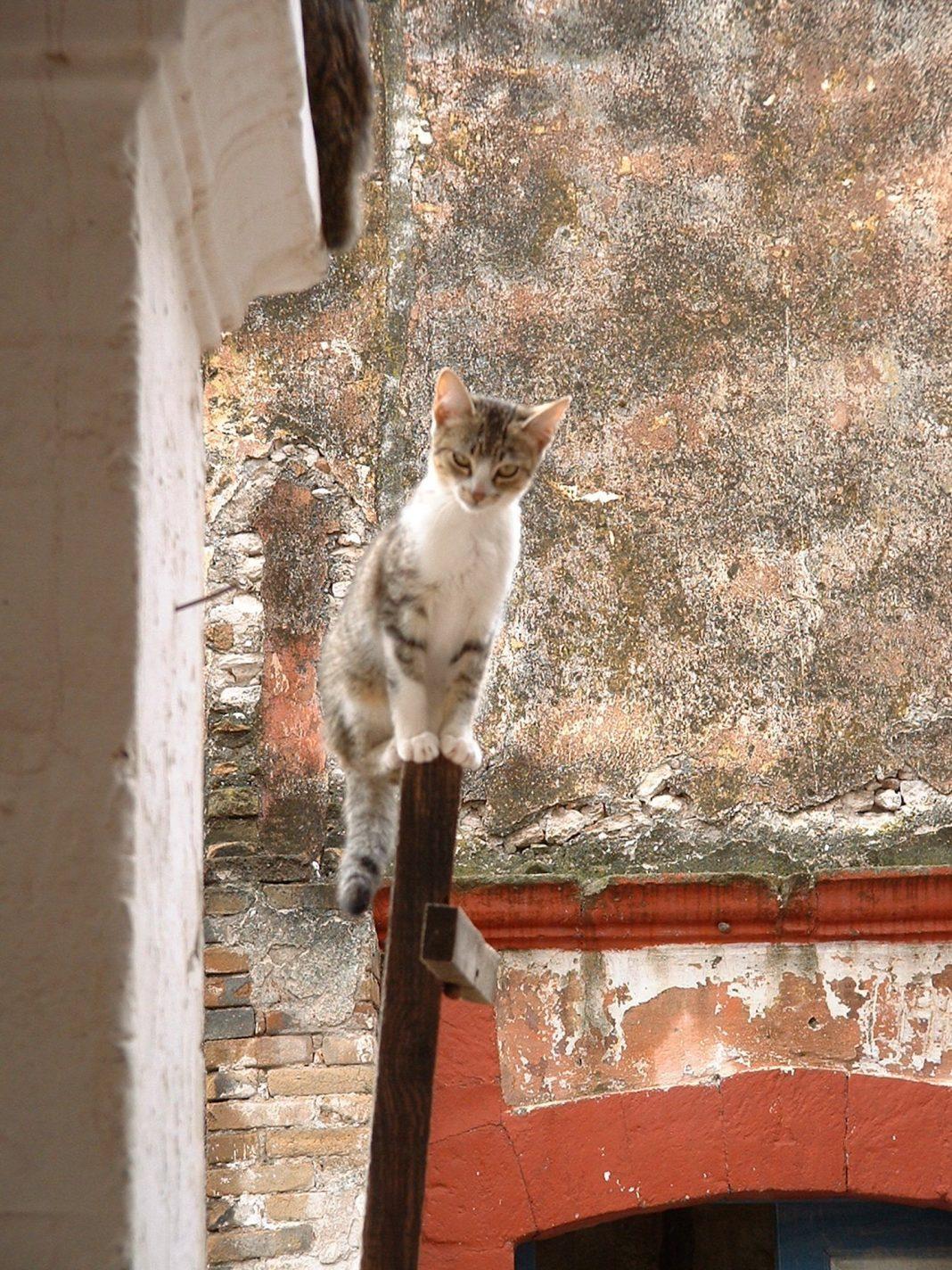 Foto: Katze am Stiel