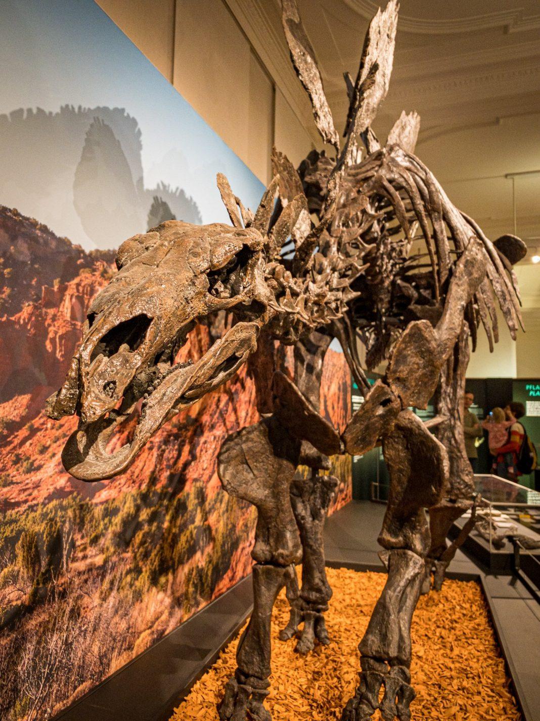 Foto: Knurriger Stegosaurus