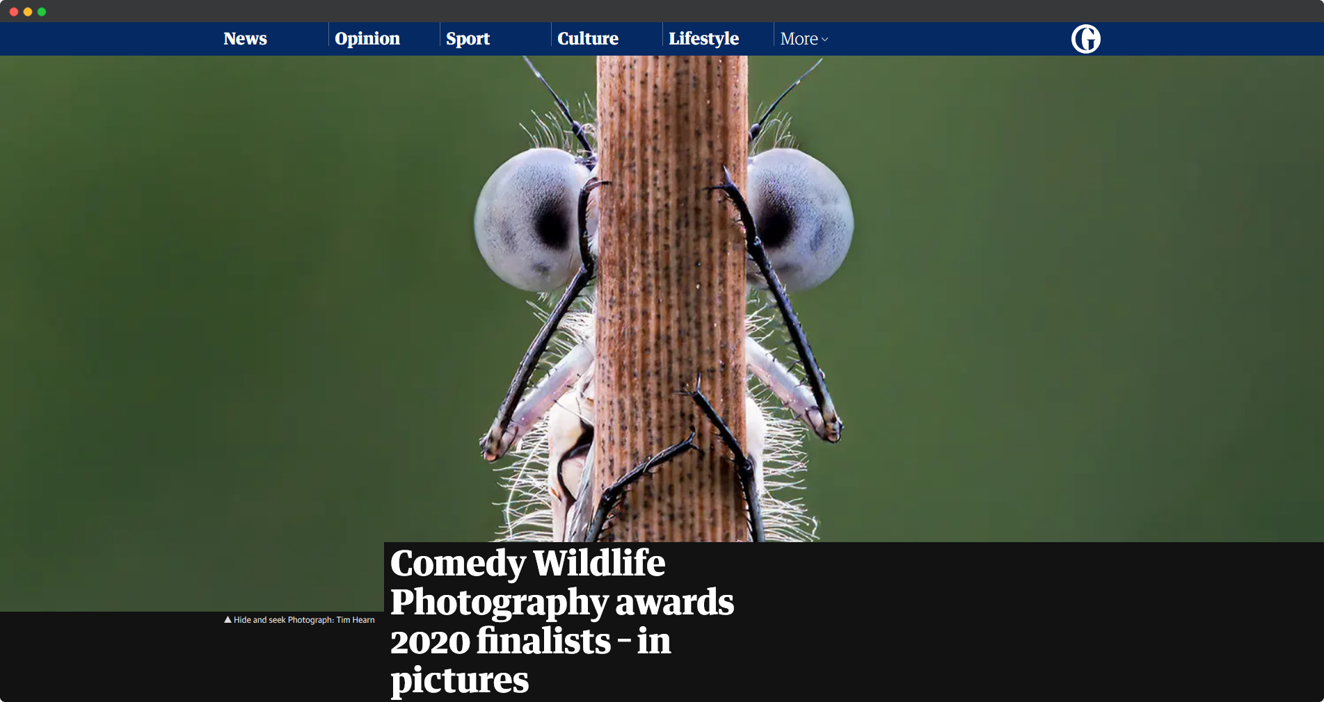 Comedy Wildlife Photography awards 2020 finalists