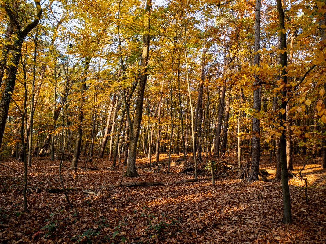 Herbst im Spicher Wald