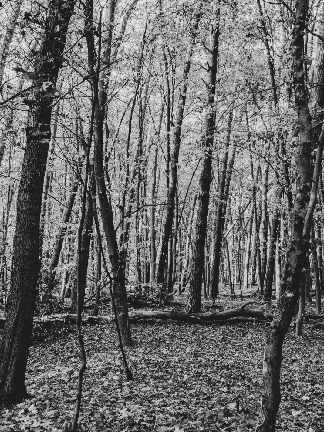 Foto: Spicher Wald